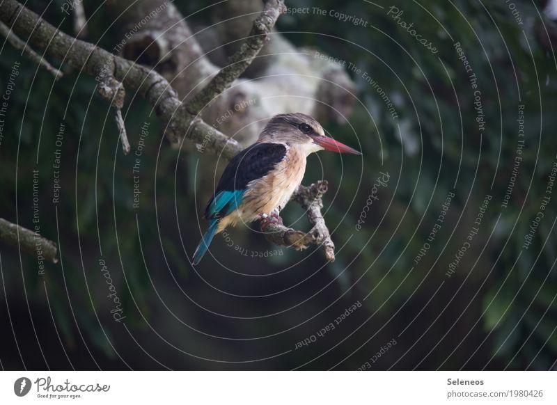 . Natur Pflanze Baum Tier Wald Umwelt klein Garten Vogel Park Wildtier Flügel beobachten nah Tiergesicht Schnabel