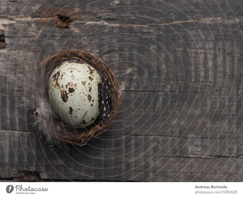Ostern Veranstaltung Natur Frühling rosa Easter Eggs brown celebration close concept decoration decorative egg festive Grunge natural Nest old present rustic