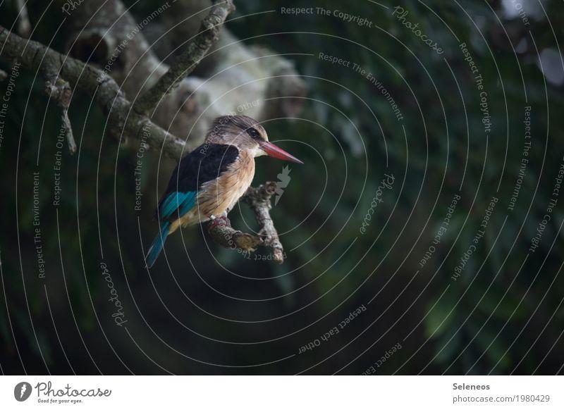 piepshow Natur Ferien & Urlaub & Reisen Baum Tier Ferne Wald Umwelt Garten Freiheit Vogel Park Ausflug Wildtier Flügel Abenteuer beobachten