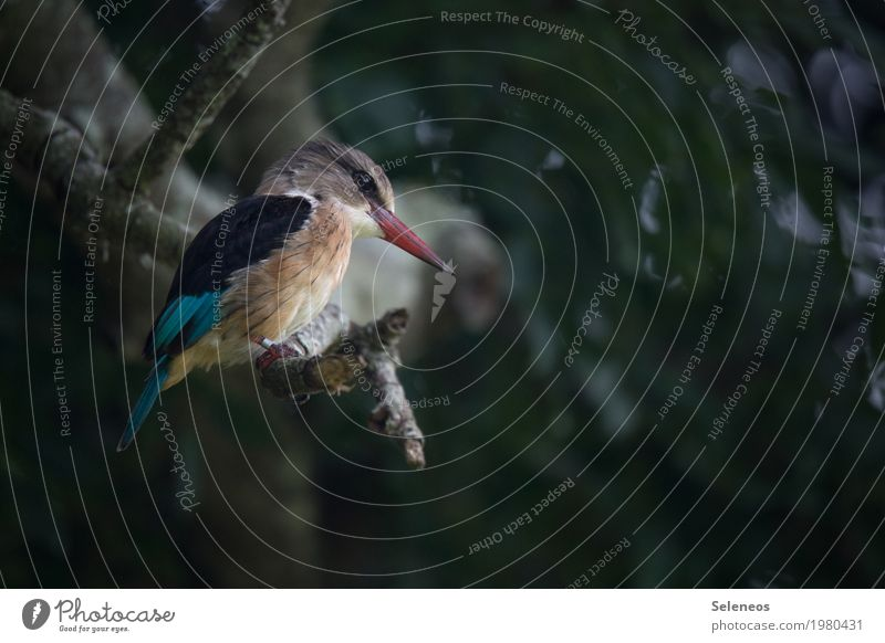 Ausschau halten Natur Pflanze Baum Tier Ferne Umwelt natürlich klein Garten Freiheit Vogel Park Wildtier Ast beobachten nah