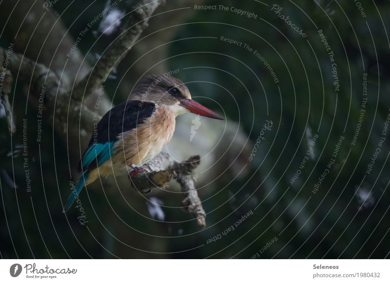 Bobby Brown Natur Sommer Baum Tier Wald Umwelt klein Vogel Wildtier Ast beobachten nah Jagd Tiergesicht Schnabel Eisvögel