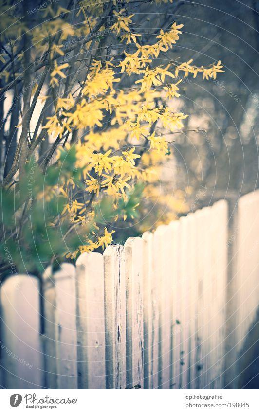 Zaun #3 Natur Pflanze Haus Garten Park natürlich Sträucher Vergänglichkeit Blühend Schönes Wetter Lebensfreude Duft Vorfreude Altstadt Stadtrand