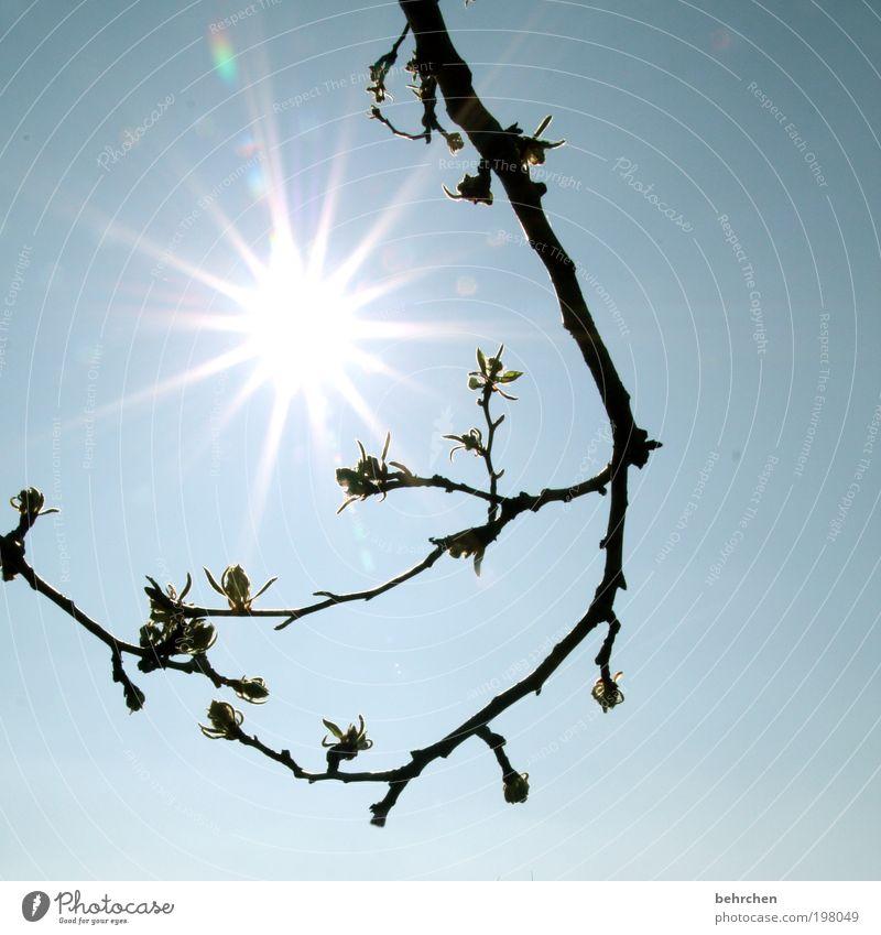 700 watt/m² Umwelt Natur Himmel Frühling Sommer Klimawandel Schönes Wetter Pflanze Baum Sträucher Blüte Garten Park hell Wärme Frühlingsgefühle Begeisterung