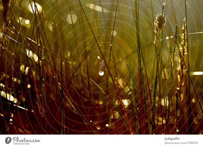Gras Natur schön Pflanze Strand Wiese Wärme Stimmung Küste Umwelt Wachstum weich Vergänglichkeit wild natürlich Ostsee