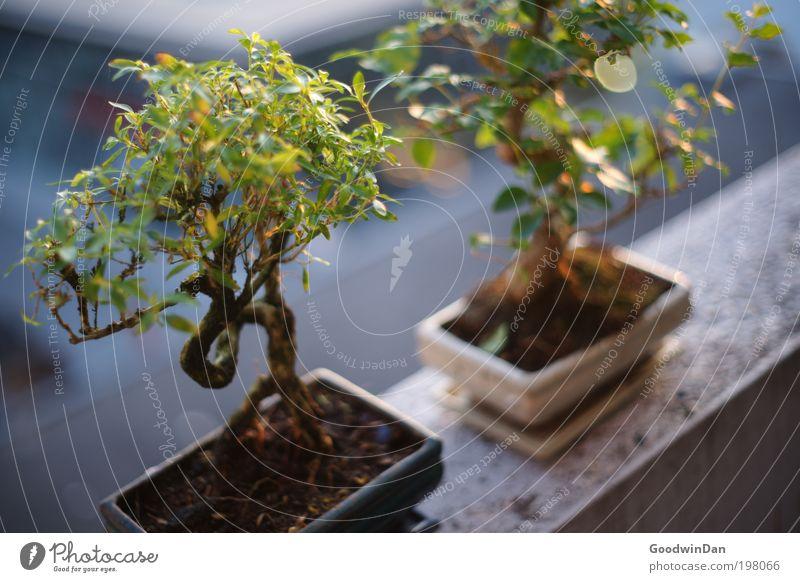 """""""Die brauchen kein Sonnenlicht"""" von wegen! Natur Baum Pflanze Frühling Denken Umwelt Erde nah beobachten natürlich Blühend leuchten Schönes Wetter exotisch"""