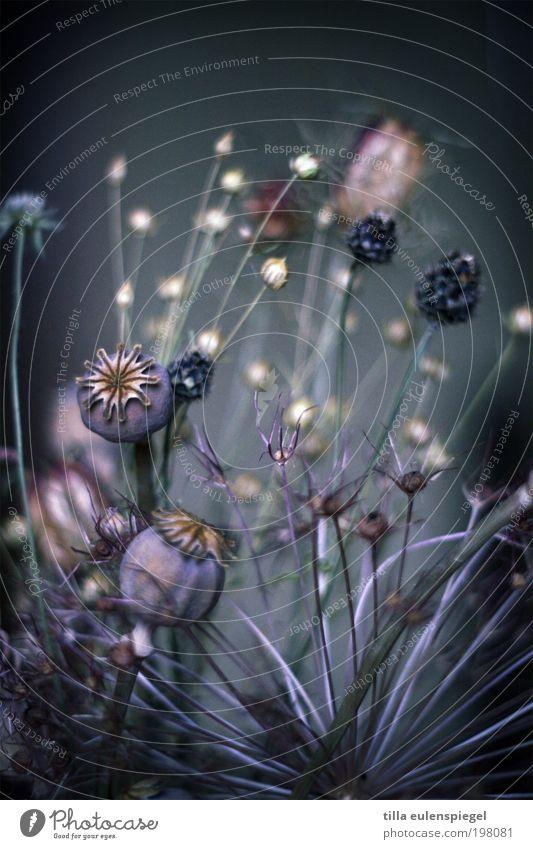 Alles Gute zum Geburtstag! Natur schön Blume blau Pflanze ruhig Farbe dunkel kalt Herbst Stil Blüte Gras träumen Umwelt violett