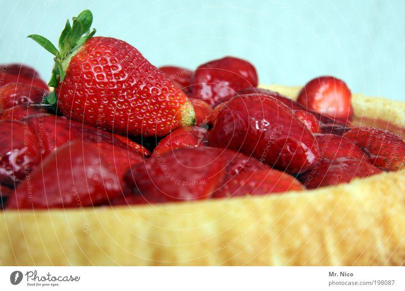 fast food Lebensmittel Frucht Kuchen Dessert rot Erdbeeren Erdbeertorte Erdbeerkuchen lecker red saftig Kalorie Jahreszeiten Obstkuchen Konditorei Ernährung