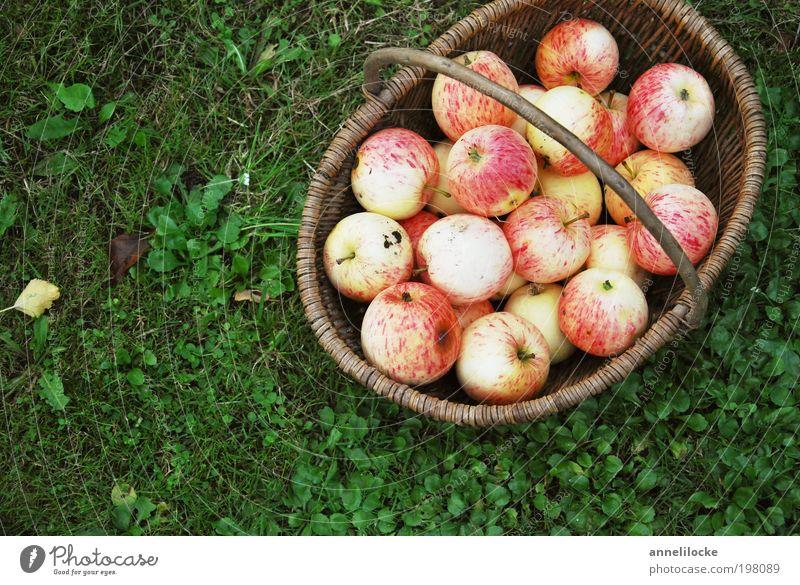 Alles Bio Lebensmittel Frucht Apfel Ernährung Bioprodukte Vegetarische Ernährung Korb Sommer Häusliches Leben Garten Erntedankfest Umwelt Natur Herbst Gras Park