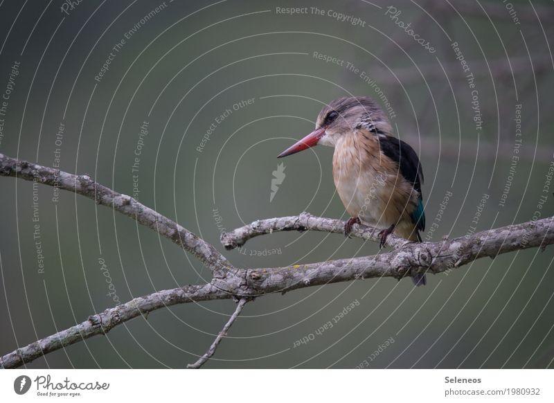 Hans Natur Baum Tier Umwelt Küste Freiheit Vogel Ausflug Wildtier nah Tiergesicht Eisvögel