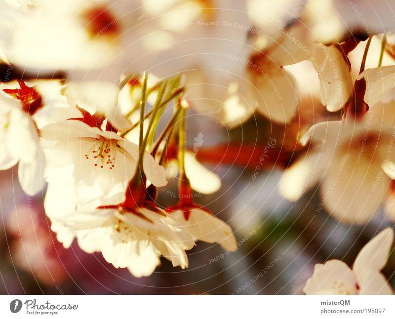 peace of mind. Natur Pflanze weiß Erholung Landschaft Einsamkeit ruhig Umwelt Leben Frühling Zufriedenheit elegant Idylle ästhetisch Zukunft Blühend