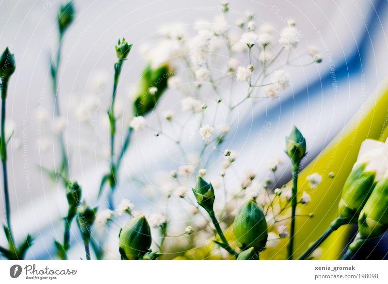 April Umwelt Natur Pflanze Frühling Sommer Blume Gras Sträucher Blüte Grünpflanze blau grün rosa weiß Farbfoto mehrfarbig Innenaufnahme Nahaufnahme