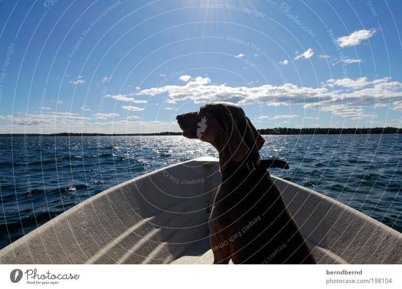 schweden Natur Wasser Sonne Meer Sommer Freude Wolken Tier Ferne Erholung Holz Hund Landschaft Wasserfahrzeug Zufriedenheit Horizont