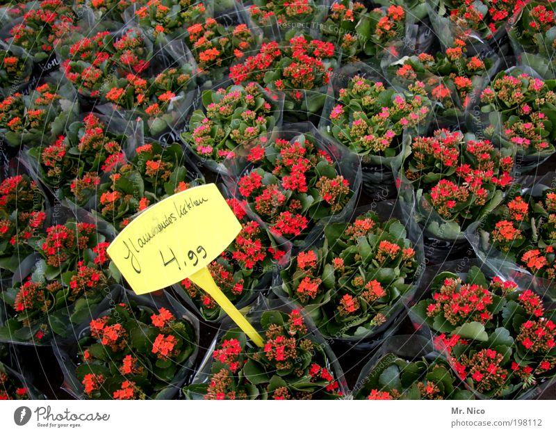 5 euro Pflanze Blume Garten gelb grün rot Preisschild Billig sonderangebot Gärtnerei Blumenladen Werbung frisch Natur Wochenmarkt Marktplatz Blüte teuer