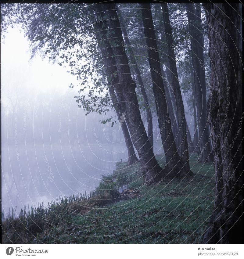 Kalter Nebel See Natur Wasser Baum Pflanze ruhig Tier Wald dunkel Landschaft Gras Traurigkeit Kunst Nebel Fisch trist Idylle
