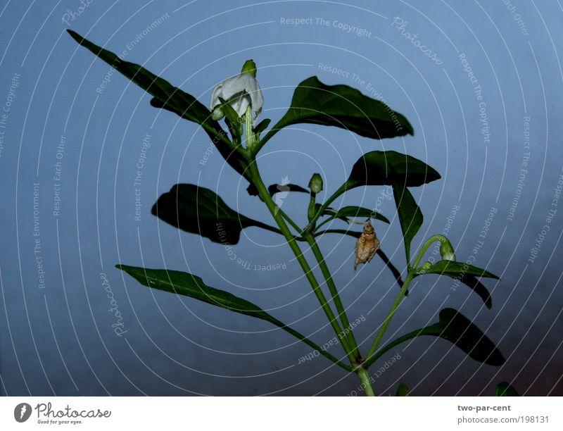 Natur schön Blume Pflanze natürlich Wildpflanze