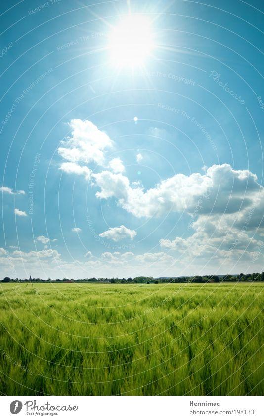 Ultraviolette Impression. Himmel Ferien & Urlaub & Reisen blau grün Sommer Erholung Landschaft Wolken Tier Ferne Leben Gefühle Frühling Wiese Freiheit Horizont