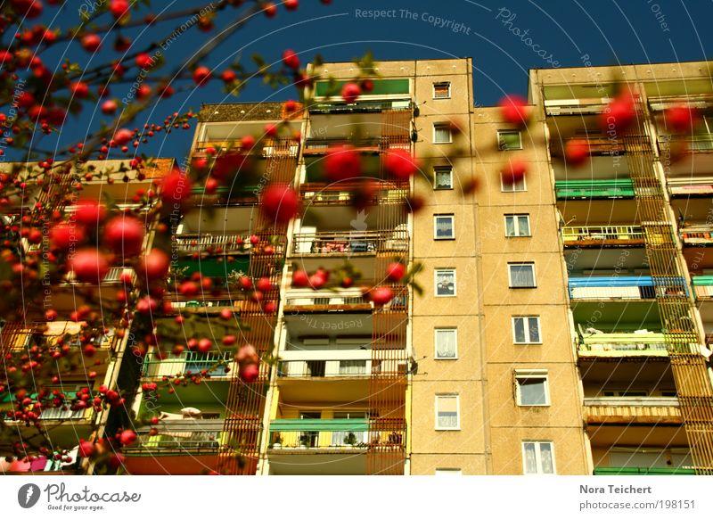 polnische Platte Umwelt Natur Pflanze Himmel Frühling Sommer Schönes Wetter Baum Sträucher Garten Park Polen Stadt Haus Bauwerk Gebäude Architektur Plattenbau