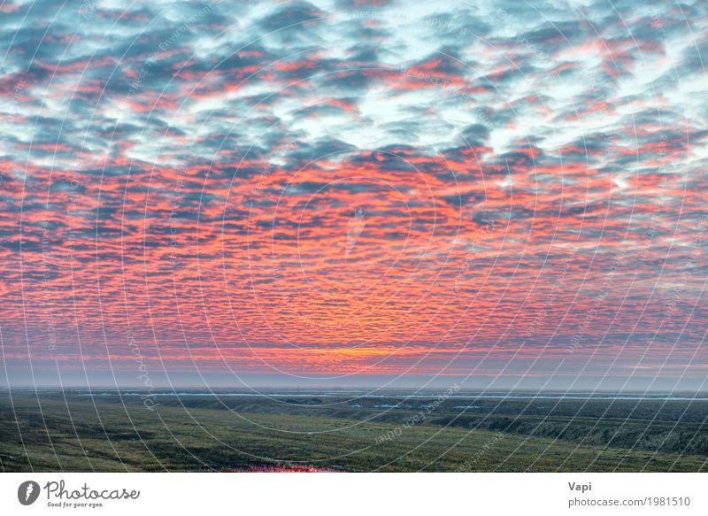Sonnenuntergang auf dem Feld mit roten Wolken schön Ferien & Urlaub & Reisen Sommer Umwelt Natur Landschaft Pflanze Himmel Horizont Sonnenaufgang Sonnenlicht