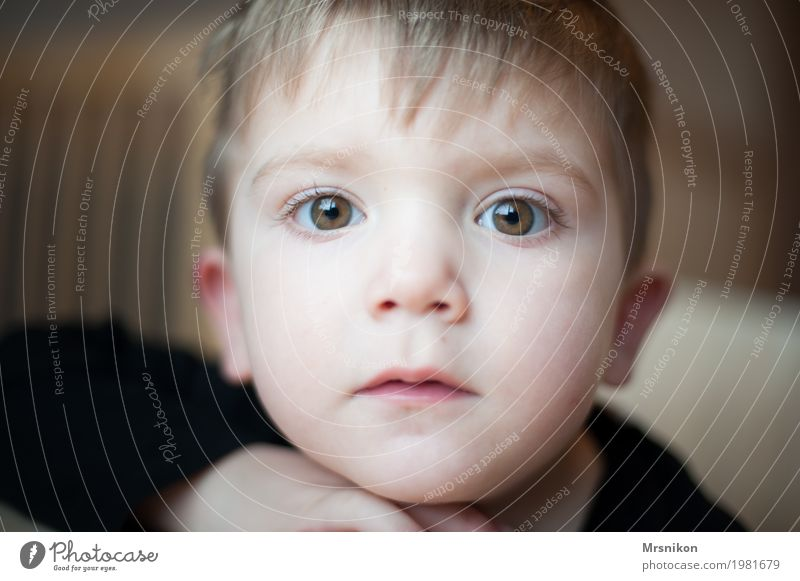 Anschauen Mensch Kind Kleinkind Junge Kindheit Auge 1 1-3 Jahre Gefühle Stimmung Zufriedenheit Wahrheit Sohn schön niedlich frech braunes Auge blond Blick