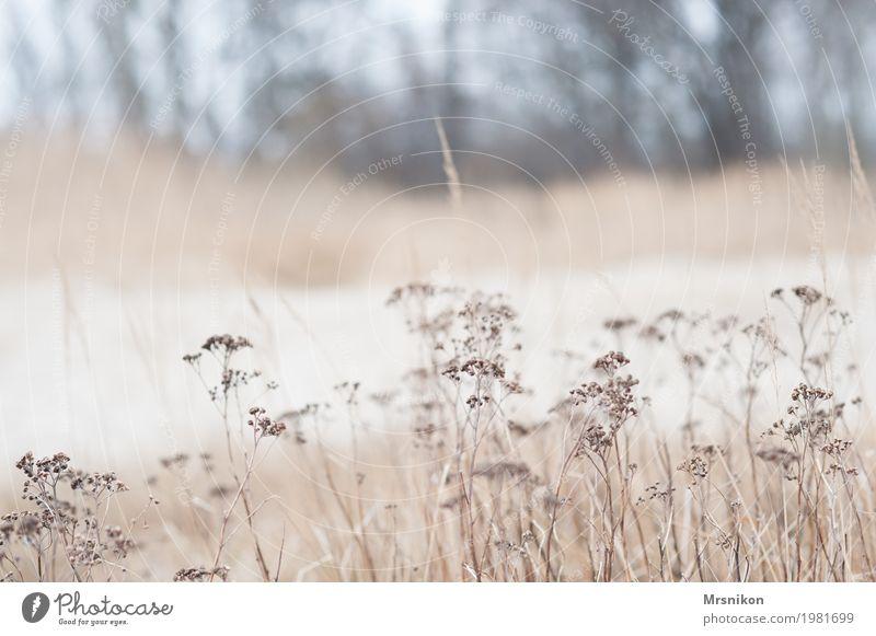An den Dünen Natur Landschaft Sand Frühling Herbst Nutzpflanze Küste Ostsee Fernweh Dünengras Stranddüne Pflanze Mecklenburg-Vorpommern Kühlungsborn Gras