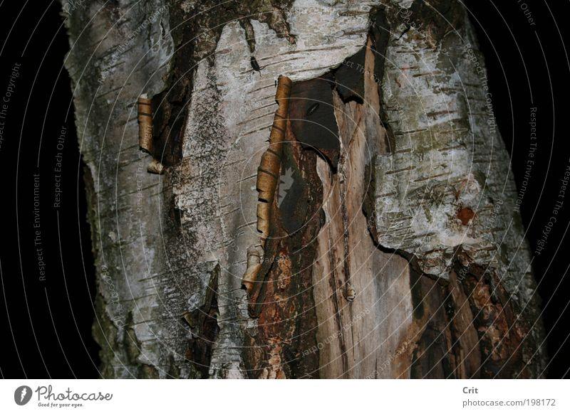 Baumrinde Natur Erde Wildpflanze Tierpaar Holz Umwelt Nahaufnahme Detailaufnahme Strukturen & Formen Menschenleer Nacht