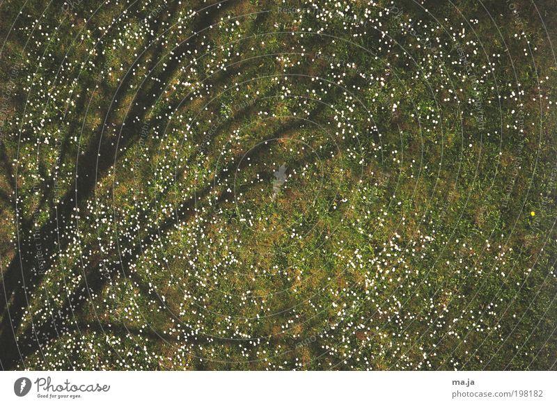 Schattenbaum schön Leben Sonne Natur Frühling Schönes Wetter Baum Blume Gras Blüte Wiese Holz Wachstum einfach grün Wandel & Veränderung Gänseblümchen