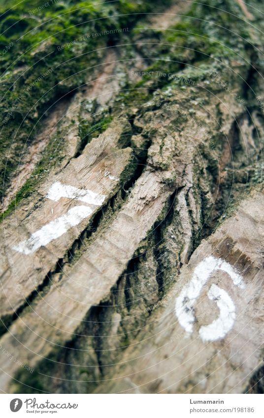 angezählt Natur alt Baum Pflanze Umwelt Schilder & Markierungen einzigartig Ziffern & Zahlen Zeichen trocken Riss Moos Jahreszahl Baumrinde Forstwirtschaft