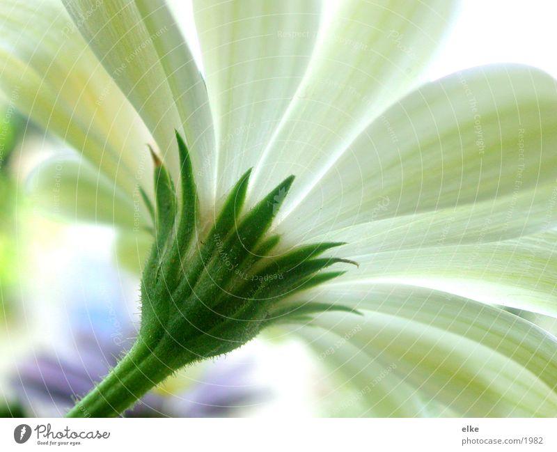 zur sonne Natur Sonne Blume grün Pflanze Blatt Blüte Wachstum Stengel Blühend Botanik Pflanzenteile
