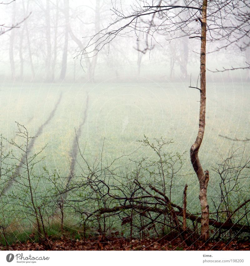 Leben allein und frei wie ein Baum Natur Wasser Pflanze Umwelt Landschaft kalt Feld Nebel Wachstum Frost Sträucher einzeln Ast Zweig