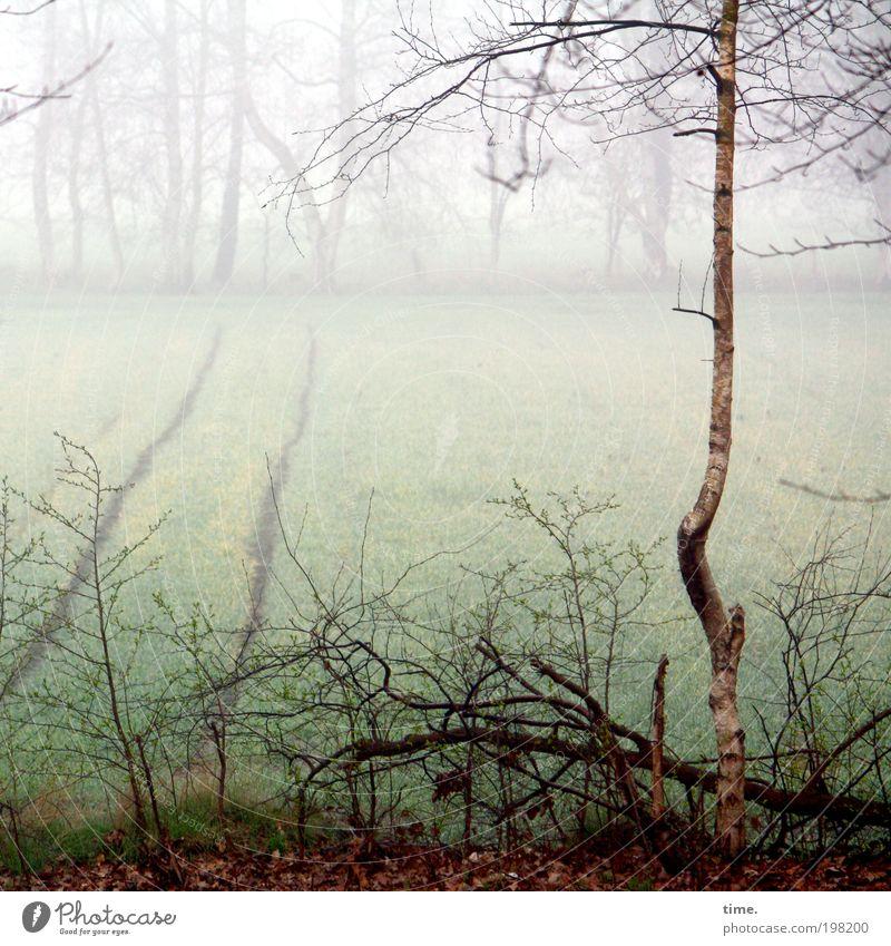 Leben allein und frei wie ein Baum Umwelt Natur Landschaft Pflanze Wasser Nebel Sträucher Feld Wachstum kalt Birke Unterholz feucht Zweig Ast Frost Ackerfurche