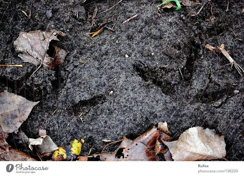 Bodenprobe Natur Pflanze Blatt schwarz braun dreckig Umwelt Erde Boden Spuren Fußspur Schlamm Herbstlaub Fährte Waldboden Abdruck