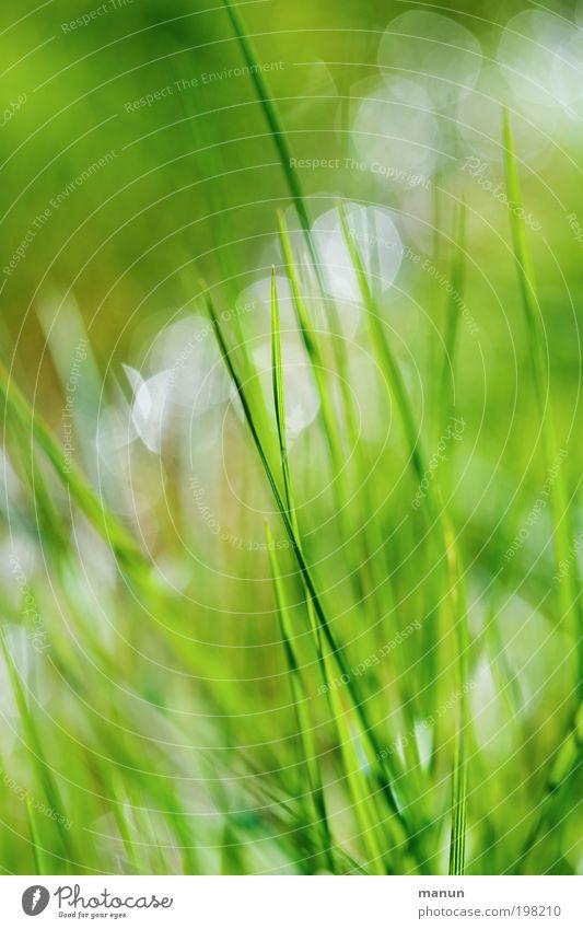 grasgrün Erholung ruhig Gartenarbeit Umwelt Natur Frühling Sommer Pflanze Gras Halm Wiese Fröhlichkeit frisch hell nass positiv Lebensfreude Frühlingsgefühle
