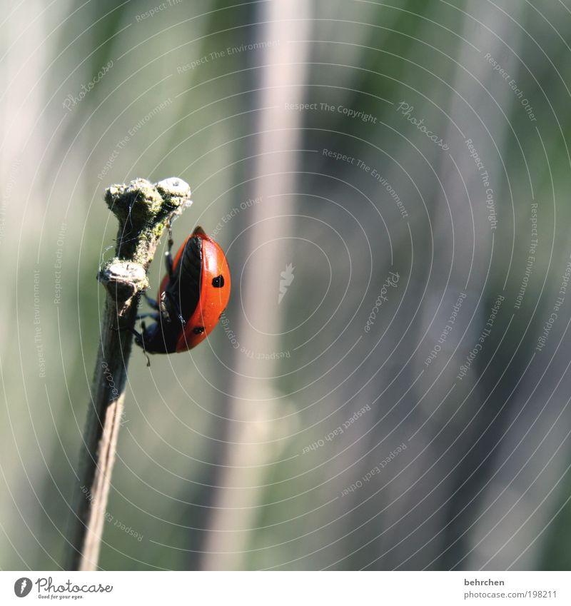 rückzug Umwelt Natur Frühling Sommer Schönes Wetter Pflanze Gras Sträucher Tier Käfer 1 Kraft Willensstärke Mut Tatkraft Vertrauen Tierliebe Verantwortung