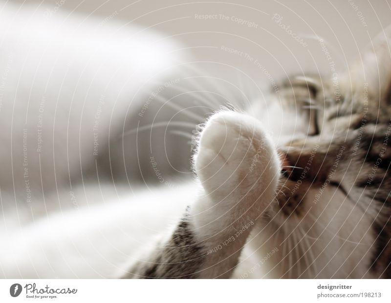 Penibel schön Körperpflege Maniküre Wohlgefühl Zufriedenheit Sinnesorgane Erholung ruhig Häusliches Leben Wohnung Sofa Sessel Haustier Katze Fell Pfote