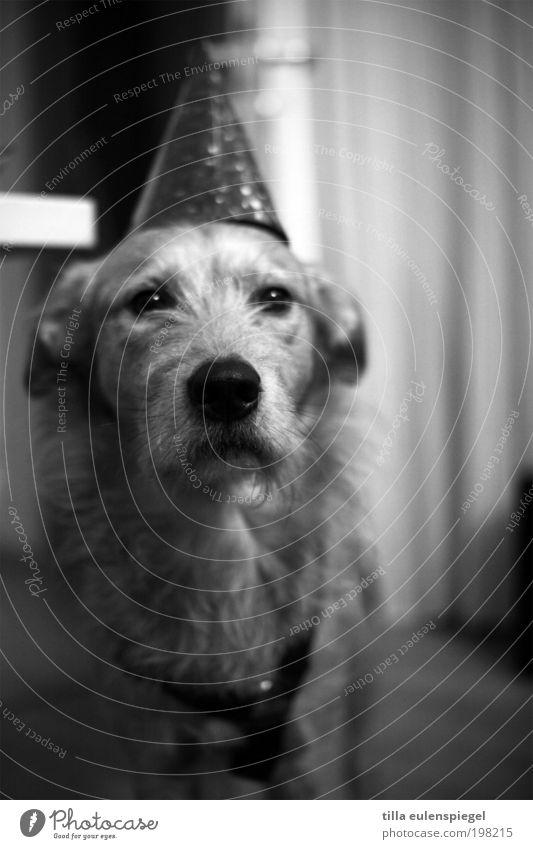 Ok Leute! Ich bin soweit. Wo steigt die Party? weiß Freude Tier schwarz Spielen Party Hund Stimmung Freundschaft Feste & Feiern warten Coolness Tiergesicht beobachten Silvester u. Neujahr Karneval