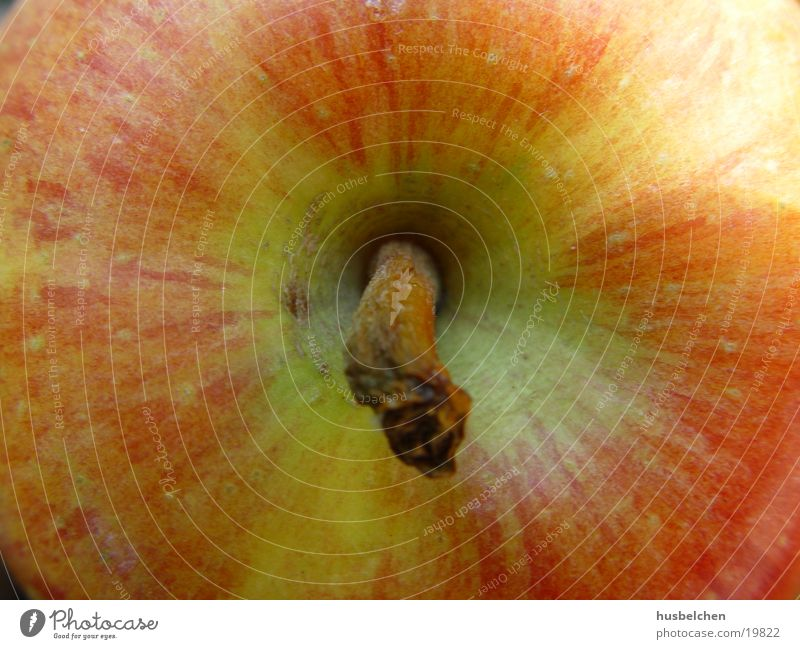 big apple Baum Garten Gesundheit Frucht Apfel Vitamin Kernobst