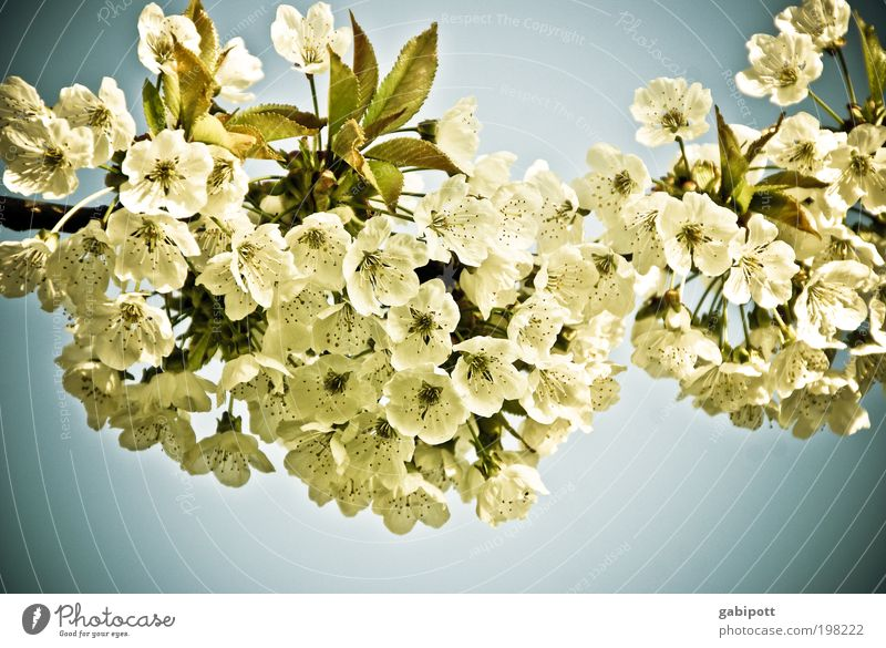 blümchenpower Natur schön Baum Pflanze Blume ruhig Erholung Landschaft Frühling Garten Blüte Zufriedenheit Fröhlichkeit Romantik Blühend Duft