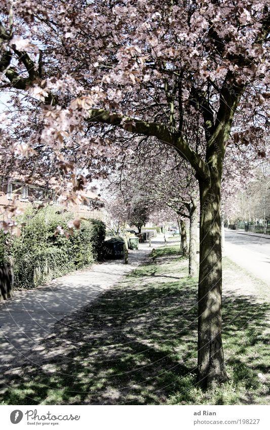Wenn Bäume schatten spenden Straße Garten Wege & Pfade leuchten Fußgänger