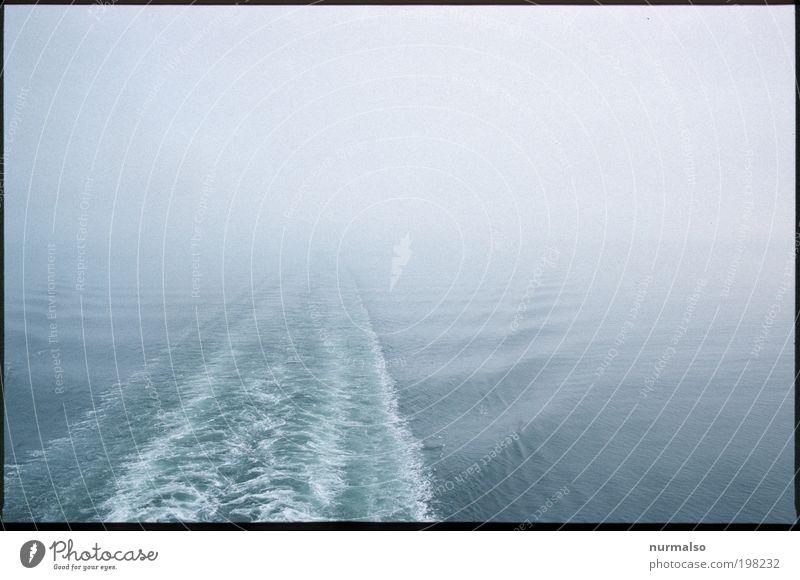 aus dem Nirgendwo Natur Wasser Pflanze Ferien & Urlaub & Reisen Meer Winter Einsamkeit Ferne Tier Landschaft Wellen Eis Ausflug Nebel Klima Frost