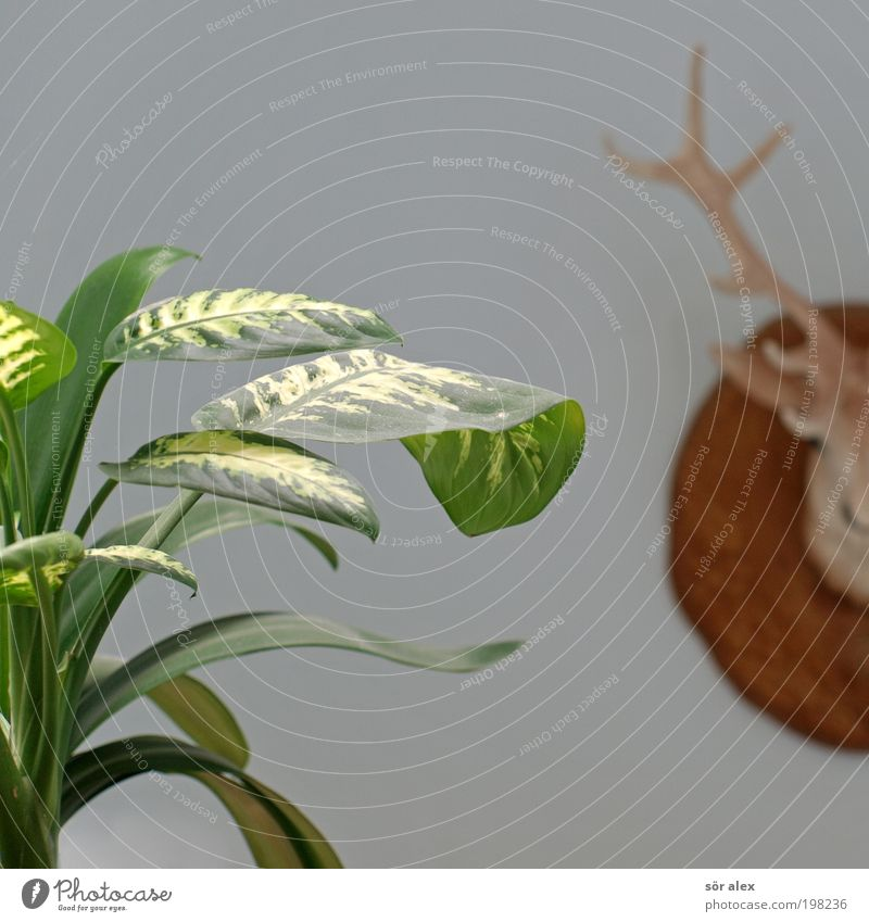 brummagem blau schön grün Pflanze Blatt braun Häusliches Leben Dekoration & Verzierung Kreativität Kitsch Kunststoff trendy Tapete Langeweile Nostalgie Horn