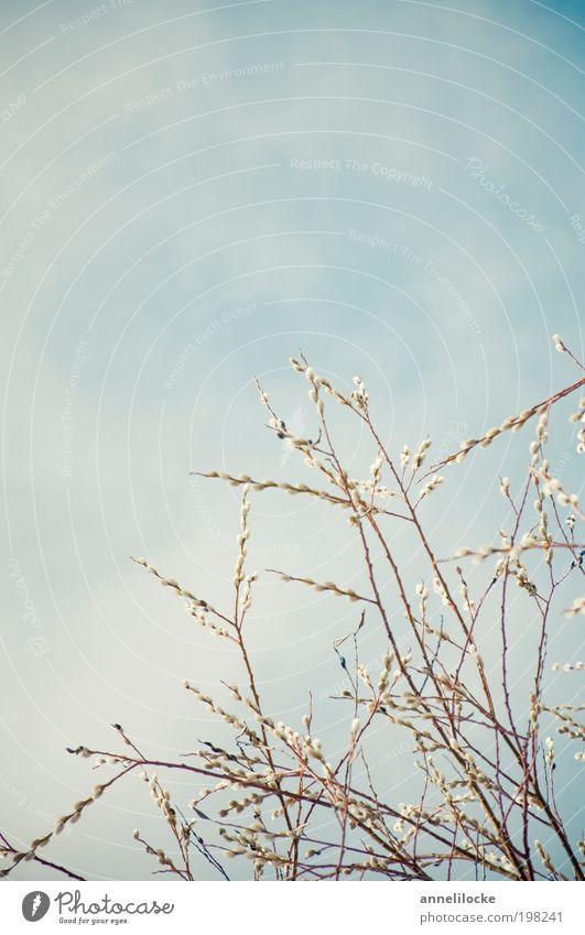 Frühlingsluft Ausflug Dekoration & Verzierung Umwelt Natur Landschaft Pflanze Luft Himmel Klima Schönes Wetter Baum Blüte Zweige u. Äste Weidenkätzchen Park
