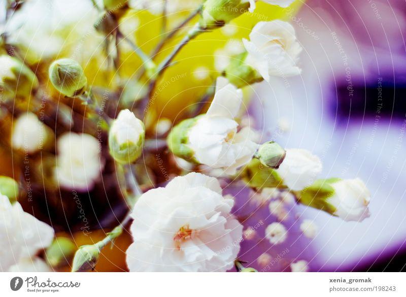 Flowers Sommer Sommerurlaub Umwelt Natur Pflanze Frühling Gras Sträucher Rose Orchidee Blatt Blüte Grünpflanze Nutzpflanze Topfpflanze exotisch Garten blau gelb