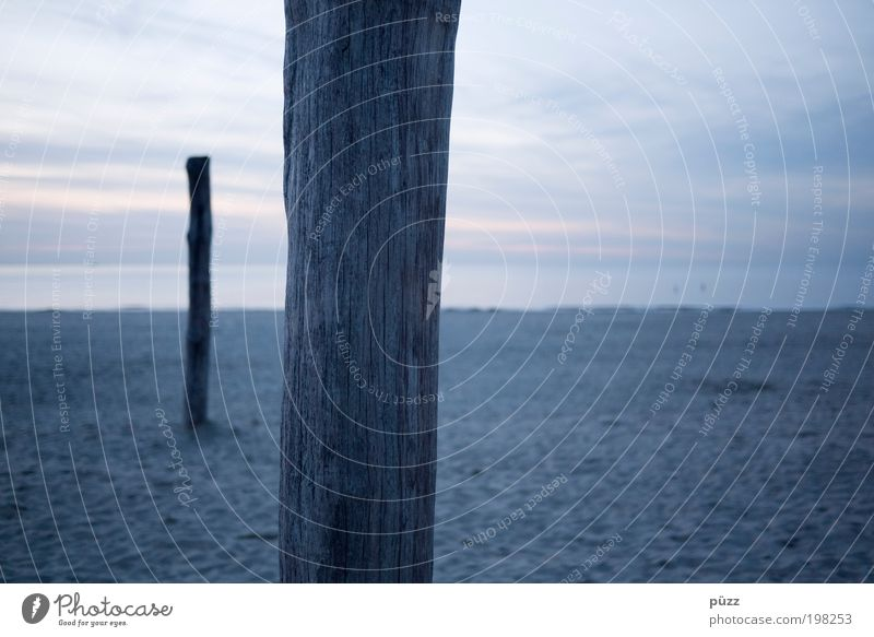 Pfähle Ferne Freiheit Strand Meer Landschaft Sand Himmel Horizont Küste Nordsee Holz dunkel nah trist blau grau Niederlande Nordseeküste Nordseestrand Pfosten