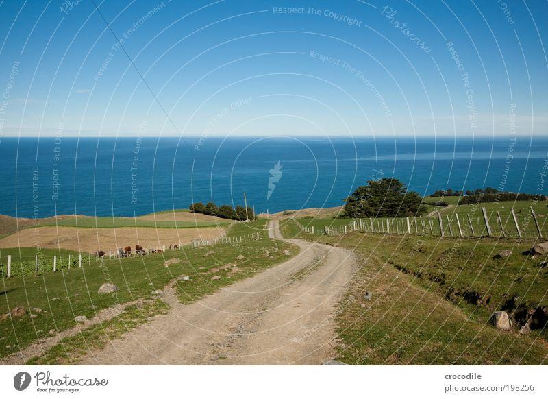 New Zealand XXVIII Umwelt Natur Landschaft Erde Himmel Wolkenloser Himmel Sonnenlicht Frühling Schönes Wetter Pflanze Gras Sträucher Wiese Feld Hügel Felsen