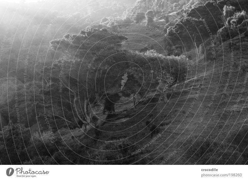 New Zealand XXXII Umwelt Natur Landschaft Pflanze Erde Sonnenlicht Baum Gras Sträucher Wald Hügel Felsen ästhetisch authentisch außergewöhnlich schwarz weiß