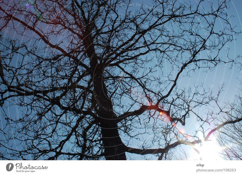 Die ersten Strahlen Sonne Sonnenlicht Schönes Wetter Baum Wald warten alt erwachen aufwachen Natur Ast Farbfoto Außenaufnahme Tag Sonnenstrahlen Gegenlicht