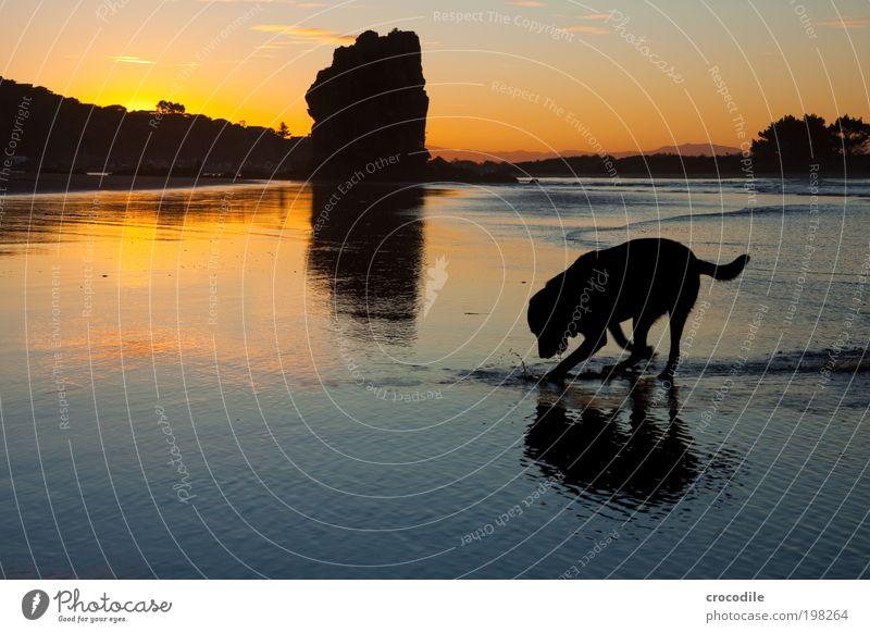 New Zealand XXXIV Umwelt Natur Landschaft Sand Wolken Sonnenaufgang Sonnenuntergang Sonnenlicht Schönes Wetter Küste Strand Tier Haustier Nutztier Hund 1 Jagd