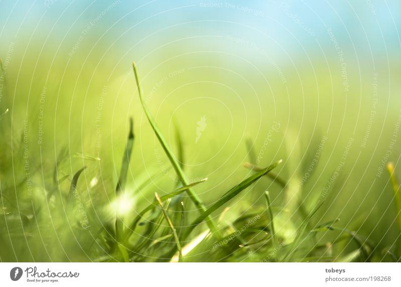 es grünt so grün... Natur grün Pflanze Erholung Wiese Gras Wärme Wachstum Rasen weich liegen Stengel Schönes Wetter Grünpflanze