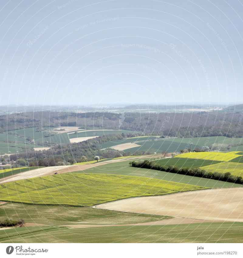 Badnerland Natur Himmel Baum grün blau Pflanze gelb Wald Wiese Landschaft Feld Aussicht Unendlichkeit Hügel Schönes Wetter Nutzpflanze
