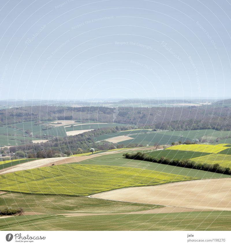Badnerland Natur Landschaft Himmel Schönes Wetter Pflanze Baum Nutzpflanze Wiese Feld Wald Hügel Unendlichkeit blau gelb grün Aussicht Farbfoto Außenaufnahme
